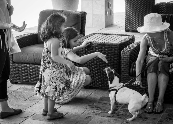 kids petting dog