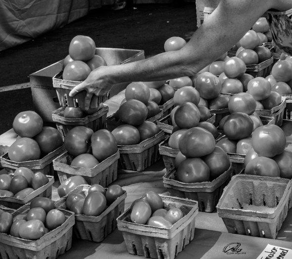 tomatos in b.w.