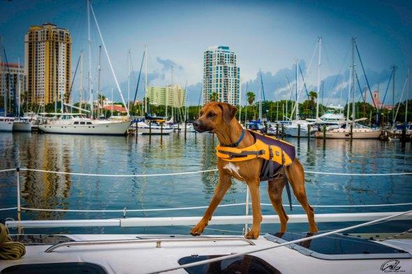 boat dog20150802_1517